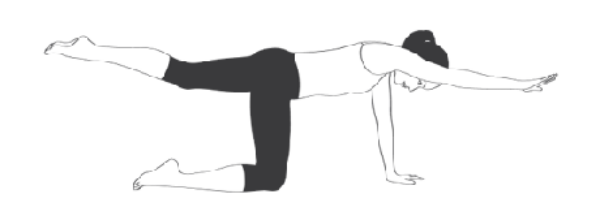 Bài tập Kneeling Superman (Bird Dog Pose)